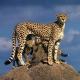 iran Fauna
