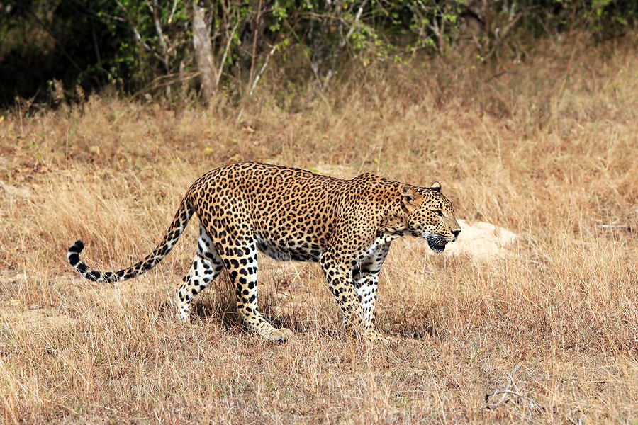 Iran Wildlife