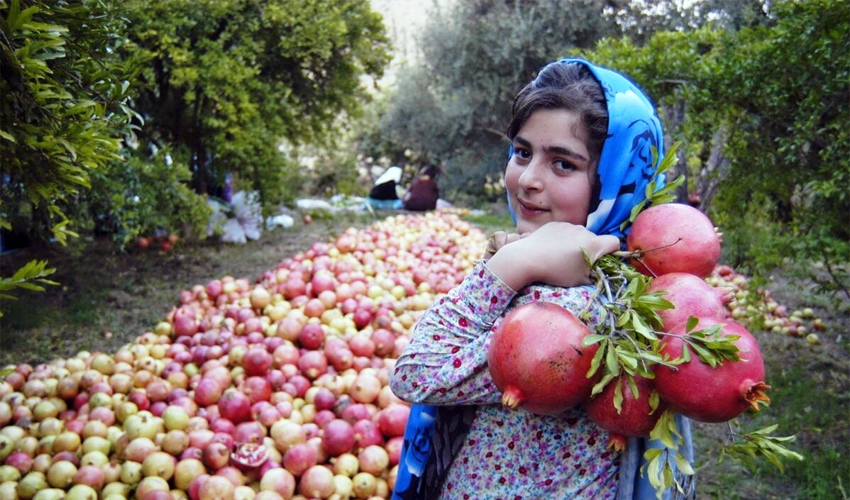 Agriculture in Iran