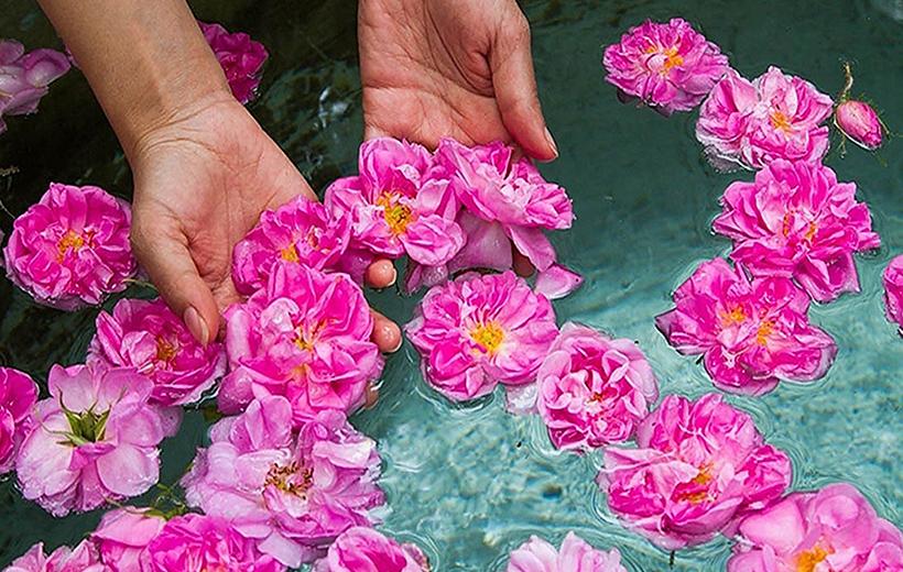Rose Picking