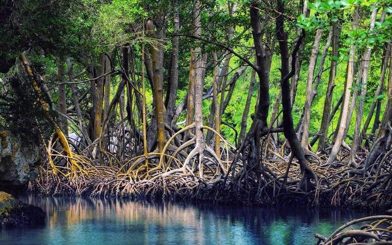 Chabahar mangrove forest